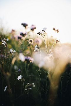 Veldbloemen tijdens zonsondergang van Evelien Lodewijks