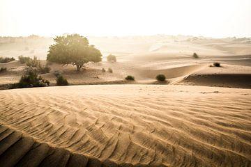 Beige woestijn landschap in India van Björn Jeurgens
