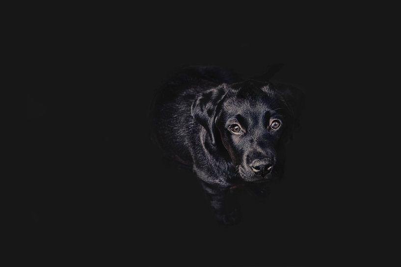 Dog in 50 shades of black van Elianne van Turennout