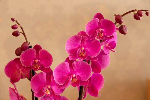 Orchidee von Jaap Mulder