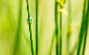 Libelle aan de waterkant