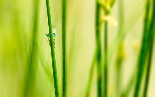 Libelle aan de waterkant van Martijn Kort