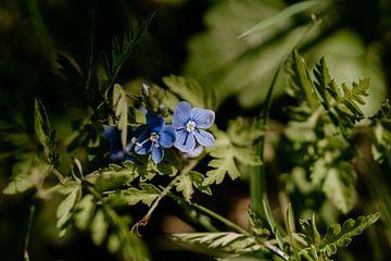 Blume von Myrthe Vlasveld