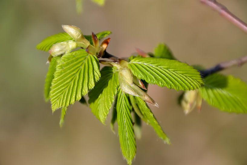 Charme au printemps sur Heiko Kueverling