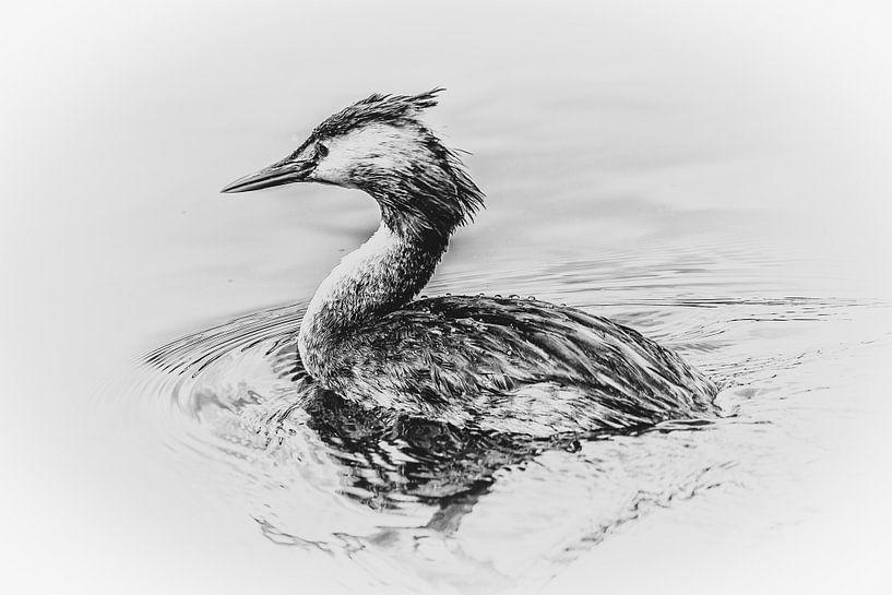 Fuut (zwart-wit) van Fotografie Jeronimo