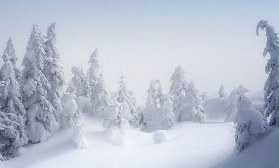 Ombre Nordique