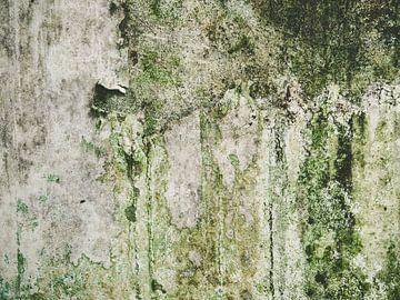 moisissure sur le mur
