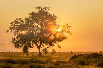 Zonnestralen door boom op mistige ochtend van Karla Leeftink