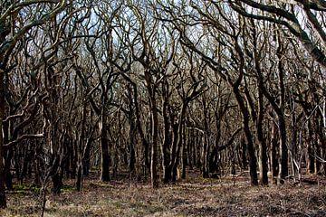 Forêts près de la plage en Zélande