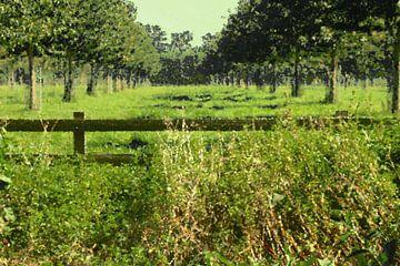 Paysage hollandais, arbres verts des prés, peinture à l'huile sur Coco Korse