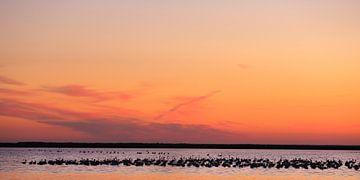 Europese flamingo's bij zonsondergang van Jacques van der Neut
