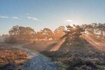 Un lever de soleil radieux sur Brunssummerheide sur John van de Gazelle