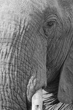 Olifantenoog von Ellen van Schravendijk