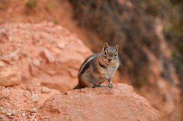Squirrel van Robert Styppa