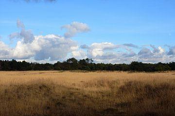 Een natuurlijke veld van Gerard de Zwaan