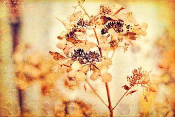 Hortensien im Herbst van Dagmar Marina