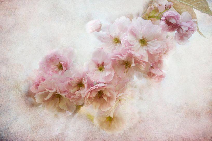 asiatische Blüten von Claudia Moeckel