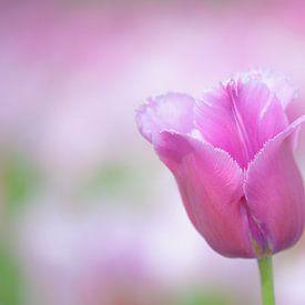 Roze tulp van Leo van Valkenburg