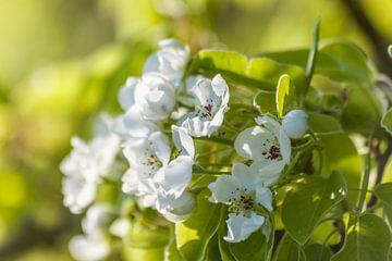Blütenzauber in weiß und grün van Christian Müringer