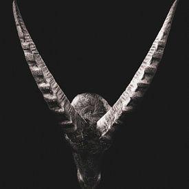 Steenbok op zwarte achtergrond van John van den Heuvel