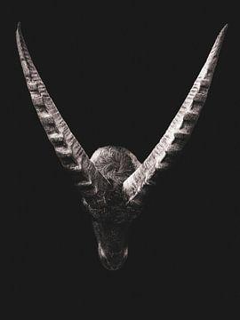 Steenbok op zwarte achtergrond