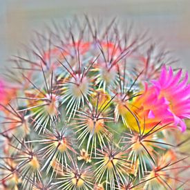 Cactus in bloei sur Amber van den Broek