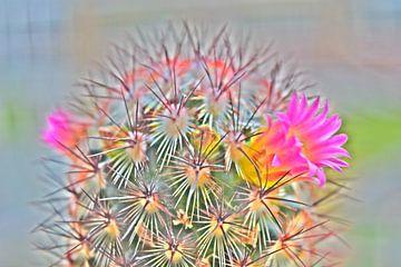 Cactus in bloei van Amber van den Broek