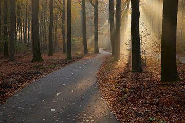 Kurvenreicher Radweg zum Licht von Cor de Hamer