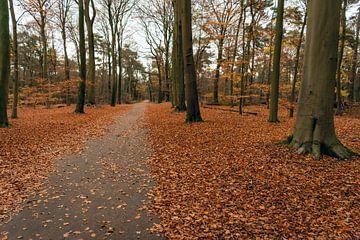 Beukenbos in herfstkleuren van Ruud Morijn