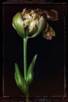 Alte Blumen 11 von Henk Leijen