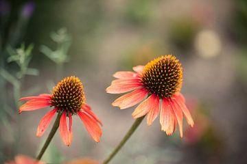 Flowerpower van Sran Vld Fotografie