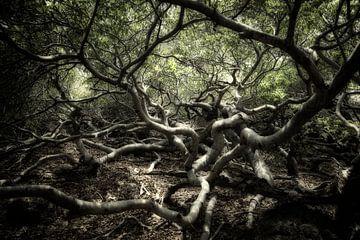 Fairytale Forest sur