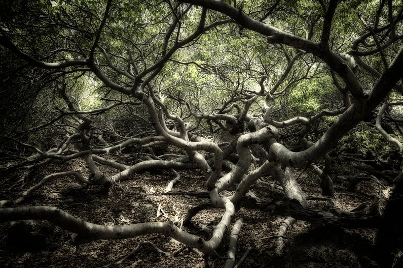 Fairytale Forest van Keesnan Dogger Fotografie