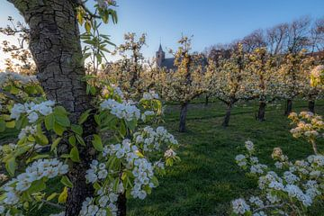 Kerk tussen fruitboomgaard met bloesem van Moetwil en van Dijk - Fotografie