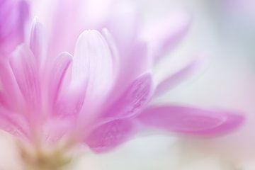 Pastel Petals. von LHJB Photography