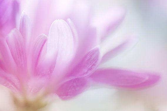 Pastel Petals. van LHJB Photography