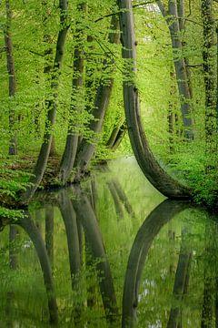 gekrümmten Bäumen von Mario Visser