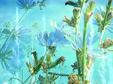 Korenbloem blauw van Anita Snik-Broeken