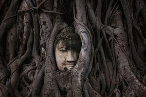 Buddha van Lars Korzelius