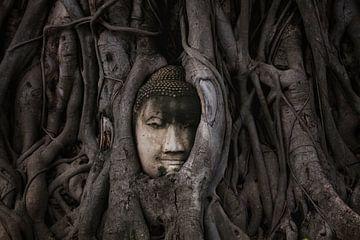 Buddha sur Lars Korzelius