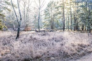 Bevroren ochtend van Patrick  van Dasler