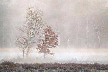 2 Bäume im Nebel in der Nähe des Decksweges im Mastbos in Breda von Jos Pannekoek