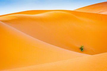 Abstraktion in der Wüste von Sam Mannaerts