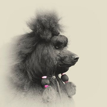 Hundeportrait eines Königpudels von Anouschka Hendriks