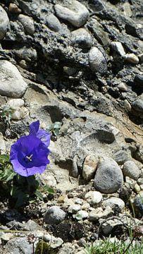 Die Blume und der Felsen von Marinescu Dan