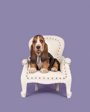 Basset puppy in een stoeltje / Cute basset hound puppy on a white baroque chair on a lavander p van Elles Rijsdijk