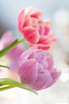 Fröhliche Tulpen von Birgitte Bergman