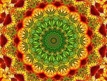 Flower Power! (Sonnenhut in Gelb und Rot) von Caroline Lichthart