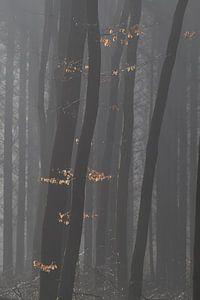Verlichte herfstbladeren
