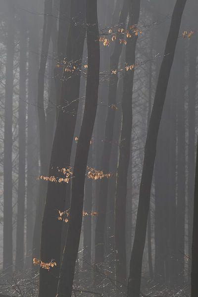 Verlichte herfstbladeren van Jovas Fotografie